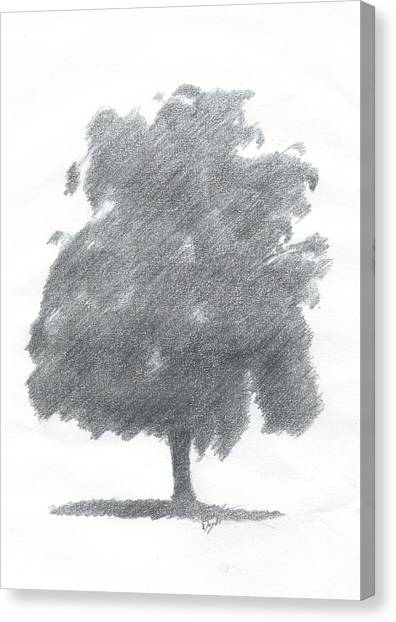 Silver Birch Drawing Number Two Canvas Print by Alan Daysh