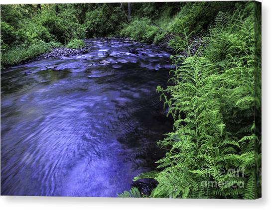 Silver Creek Canvas Print