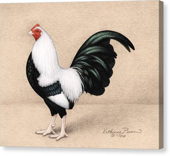 Roosters Canvas Print - Silver Duckwing Old English Game Bantam by Katherine Plumer