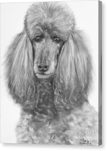 Silver Standard Poodle Drawing Canvas Print