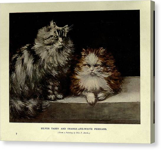 Manx Cats Canvas Print - Silver Tabby And Orange And White Persians by Philip Ralley