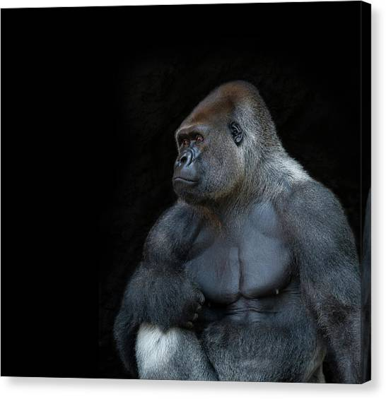 Silverback Gorilla Portrait In Profile Canvas Print by Haydn Bartlett Photography
