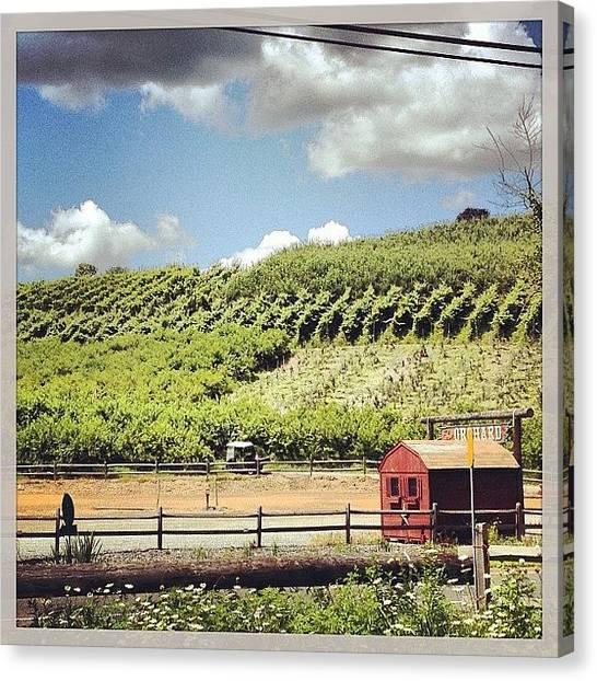 Orchard Canvas Print - Silvermans Farm by Liz Dancho
