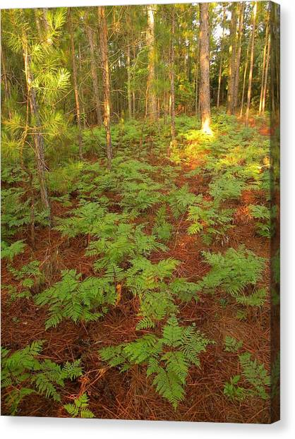 Fern Favorite Canvas Print