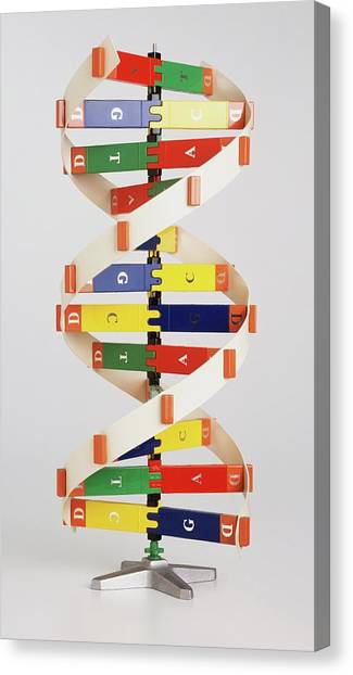 Genetics Canvas Print - Simplified Colourful Model Of Dna by Dorling Kindersley/uig