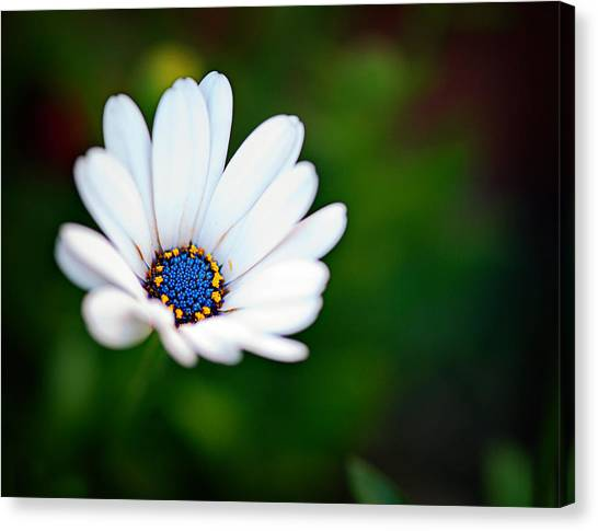 Simply Beautiful Canvas Print by Tammy Smith