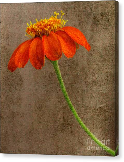 Simply Orange Canvas Print
