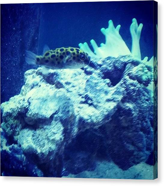 Fish Tanks Canvas Print - Since My Anenome Decided To Eat by Brian Anthony