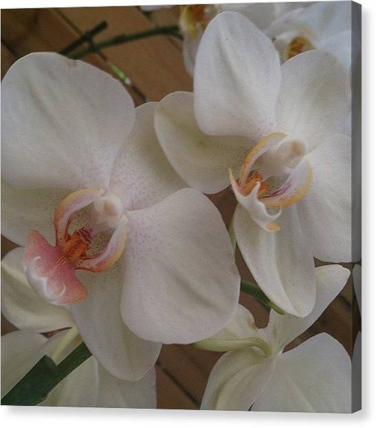 Law Enforcement Canvas Print - #sinfiltros #planta #orquídea #flor by Alex Gutierrez Calzada