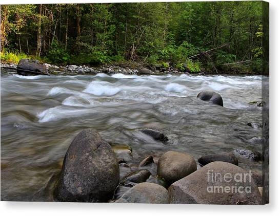 Singing Creek Canvas Print by Tim Rice