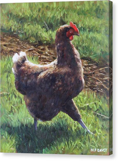 Single Chicken Walking Around On Grass Canvas Print