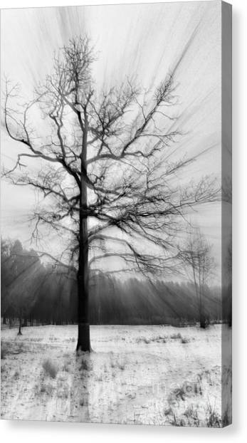 Single Leafless Tree In Winter Forest Canvas Print