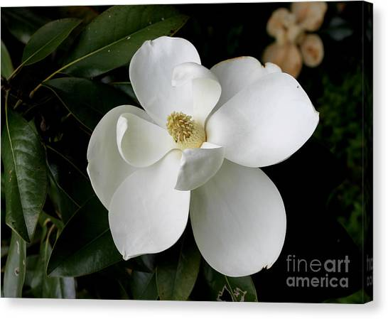 Single Magnolia II Canvas Print