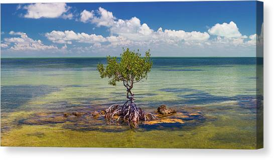 Mangrove Trees Canvas Print - Single Mangrove Tree In The Gulf by Panoramic Images