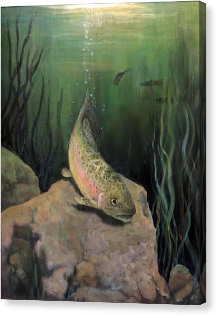 Single Trout Canvas Print