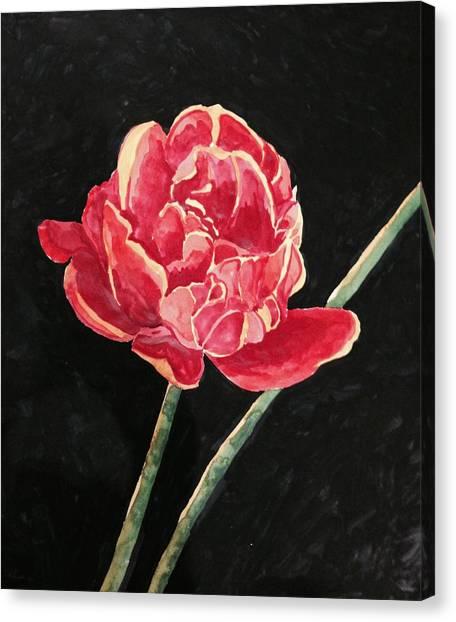 Single Tulip On Black Background Canvas Print