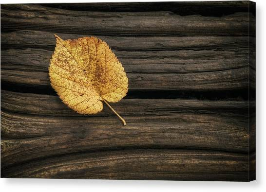 Amber Canvas Print - Single Yellow Birch Leaf by Scott Norris