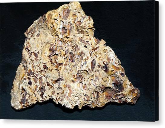 Fluids Canvas Print - Sintered Limestone by Dirk Wiersma