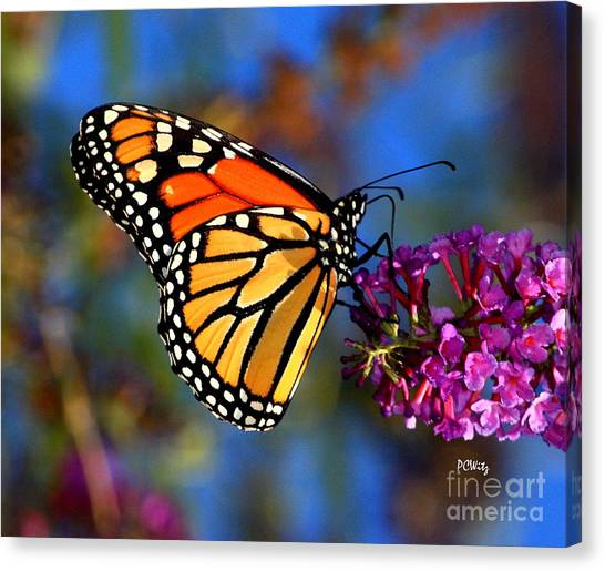 Sipping Monarch Canvas Print