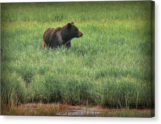 Sitka Grizzly Canvas Print