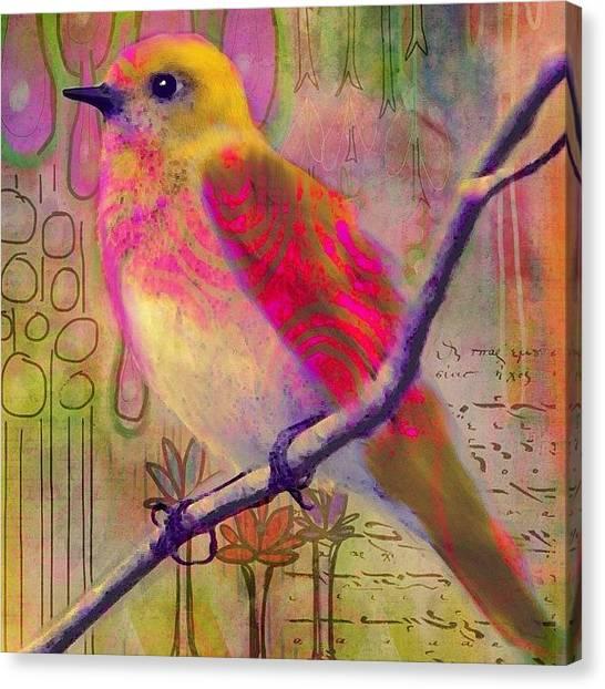 Robins Canvas Print - Sittin Pretty  #birdart #mixedmediaart by Robin Mead