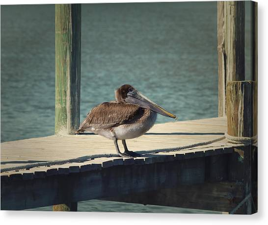 Florida Wildlife Canvas Print - Sitting On The Dock Of The Bay by Kim Hojnacki