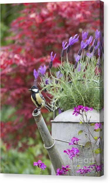 Titmouse Canvas Print - Sitting Pretty by Tim Gainey