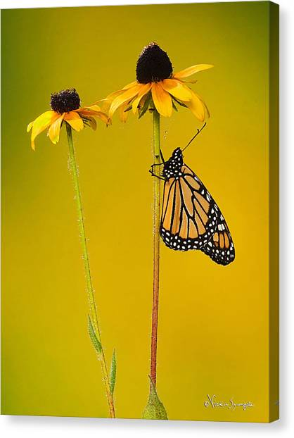 Sitting Pretty Canvas Print