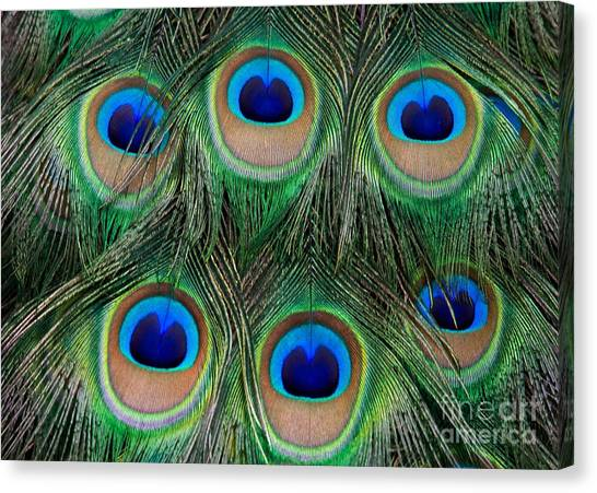 Six Eyes Canvas Print