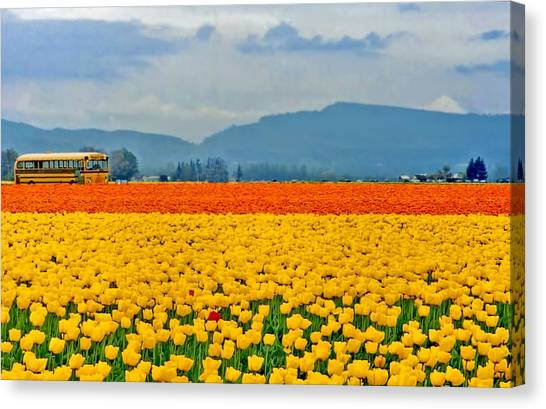 Skagit Valley Tulip Field Canvas Print