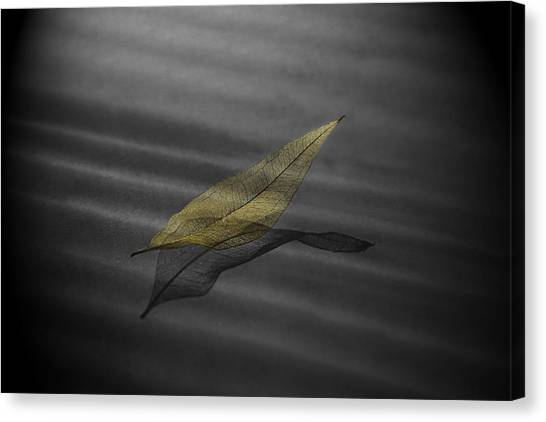 Skeleton Leaf 4524 Canvas Print