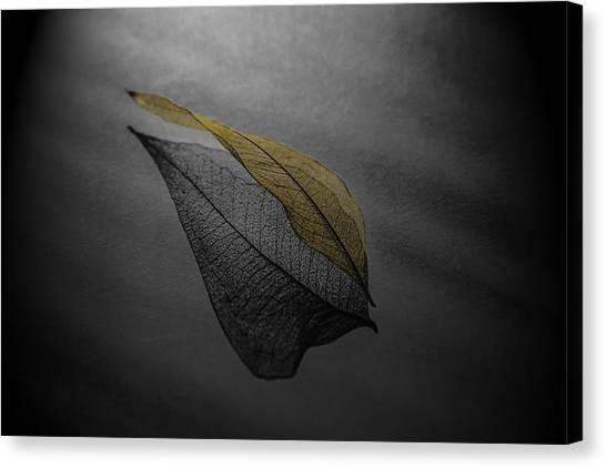 Skeleton Leaf 4716 Canvas Print