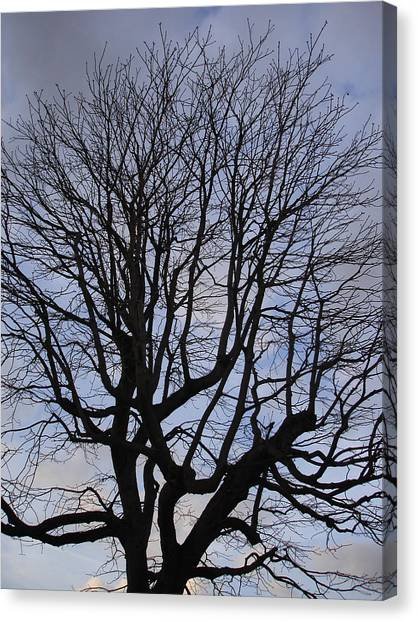 Skeleton Tree Canvas Print by Michel Mata