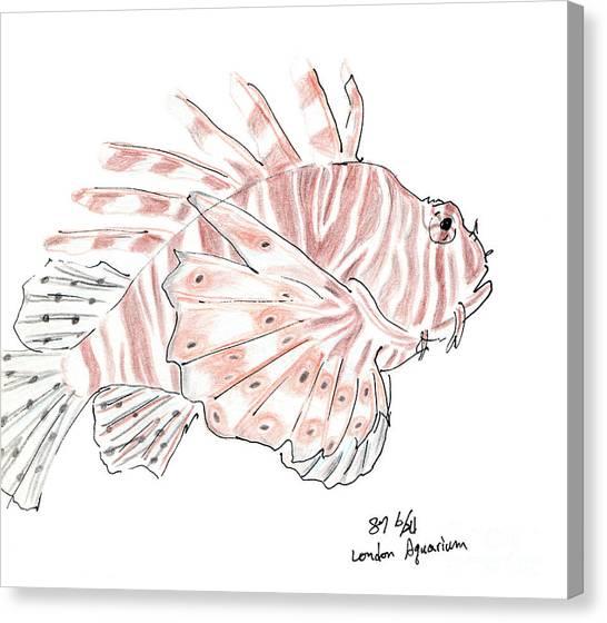 Sketch Of Lion Fish At London Aquarium Canvas Print