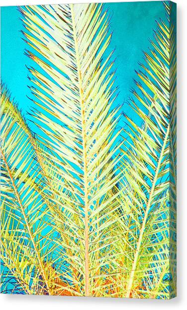 Sketchy Palm Fronds Canvas Print