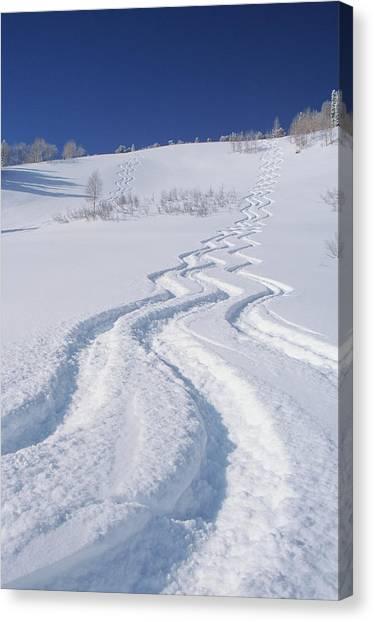 Uinta Canvas Print - Ski Tracks In Silver Fork, Big by Howie Garber