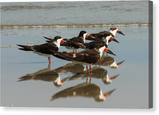 Skimmers With Reflection Canvas Print