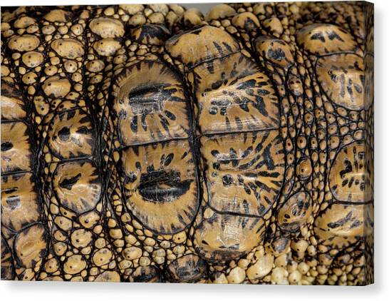 Crocodiles Canvas Print - Skin Of A Young Nile Crocodile by Pascal Goetgheluck/science Photo Library