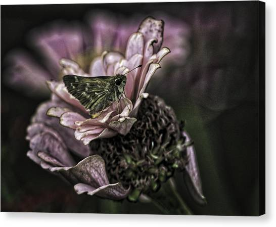 Skipper On Flower Canvas Print