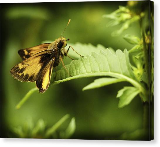 Skipper X Canvas Print