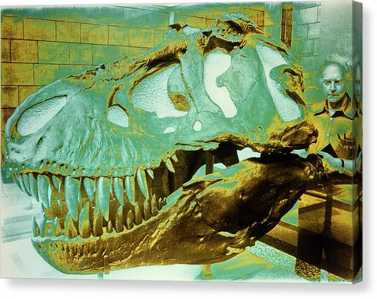 Tyrannosaurus Canvas Print - Skull Of Tyrannosaurus Rex by Sinclair Stammers/science Photo Library.