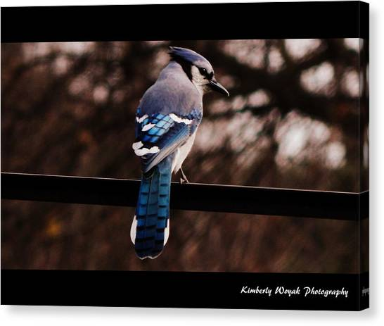 Sky Blue Wings Canvas Print