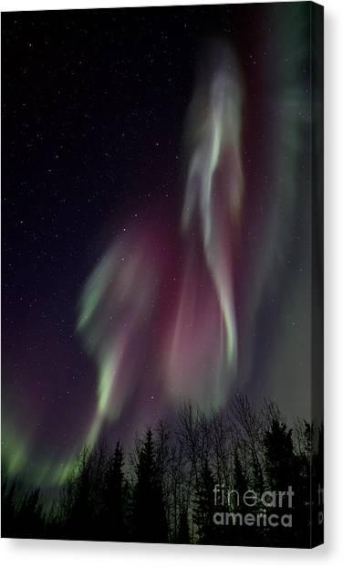 Treeline Canvas Print - Sky Dancer by Priska Wettstein