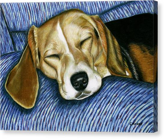 Sleeping Beagle Canvas Print