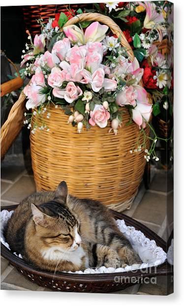 Sleeping Cat At Flower Shop Canvas Print
