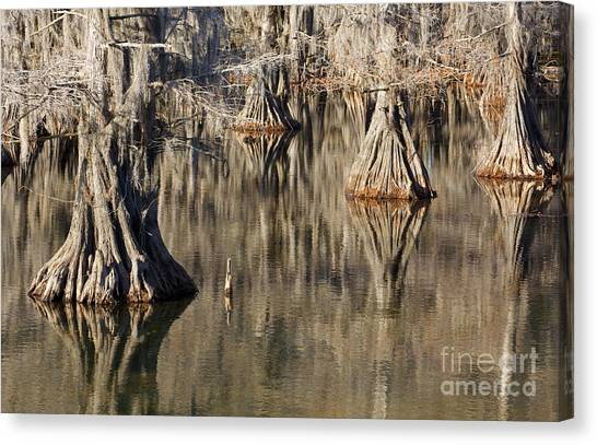 Sleeping Cypress Canvas Print