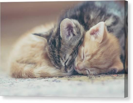 Sleeping Kittens Canvas Print by Harpazo hope