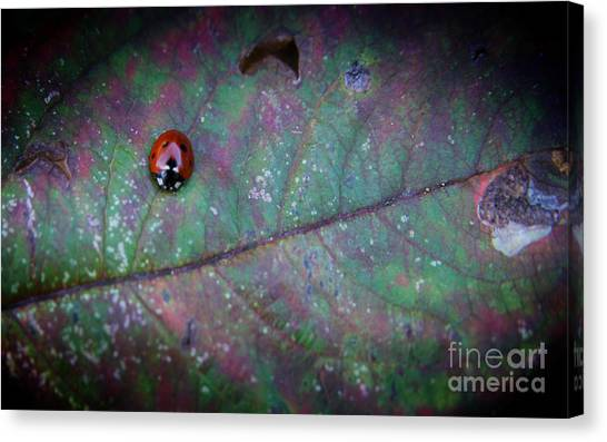Sleeping Ladybird Canvas Print by Jolanta Meskauskiene