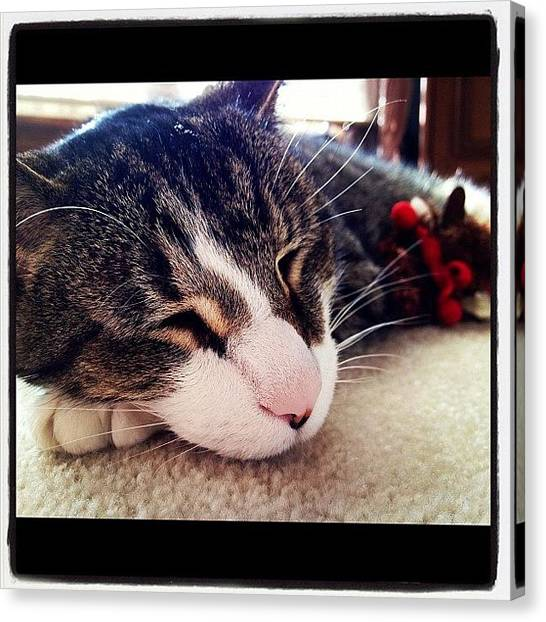 Animals Canvas Print - Sleeping by Mike Maher