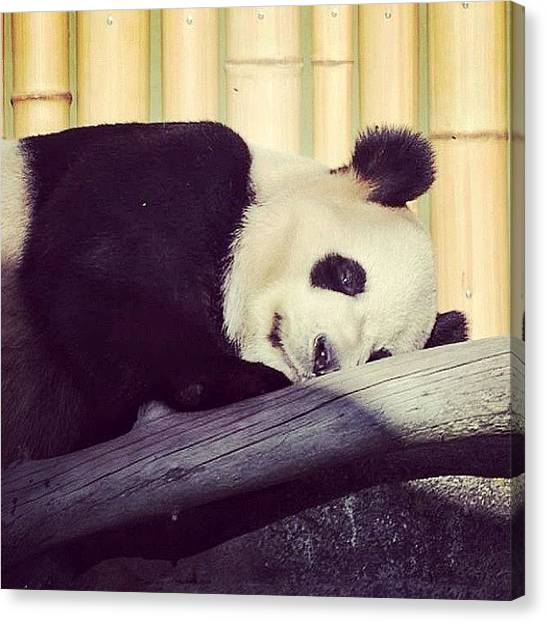 Panda Canvas Print - Sleeping Panda Again #sleeping by Bruce Wang